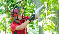 Baummanagement für Hausverwaltungen vom Maschinenring