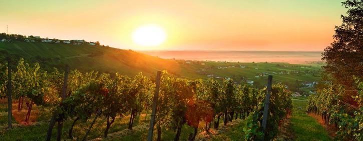 Foto zur Verfügung gestellt von Burgenland Tourismus.