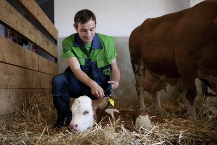 Zivildienst in der Landwirtschaft