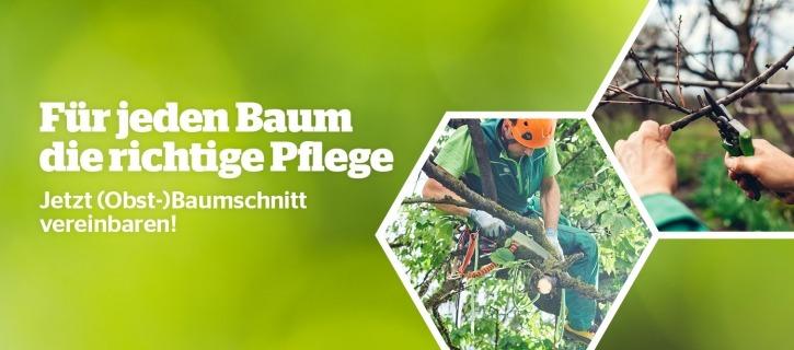 Baumschnitt Maschinenring Tirol