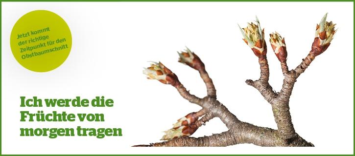 Obstbaumschnitt beim Maschinenring