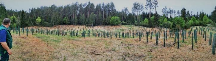 Blick auf rund 2.000 Pflanzen. Insgesamt werden über 104.000 Pflanzen gesetzt, die zum Schutz vor Wildverbiss mit Einzelstammschutz versehen oder eingezäunt werden müssen. In Summe werden dafür über 16 km Wildschutzzäune errichtet.
