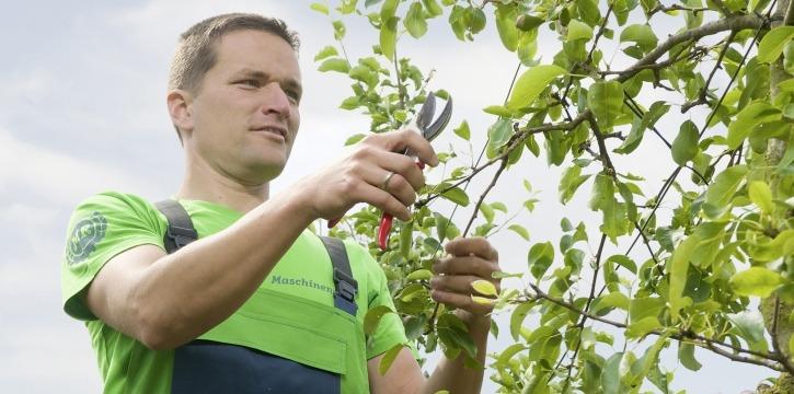 Obstbaumschnitt Maschinenring Sommerschnitt