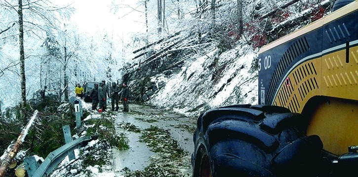 Schadholzaufarbeitung Tirol Maschinenring