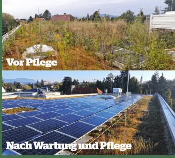 Wartung und Pflege von begrünten Dächern mit Photovoltaikanlage