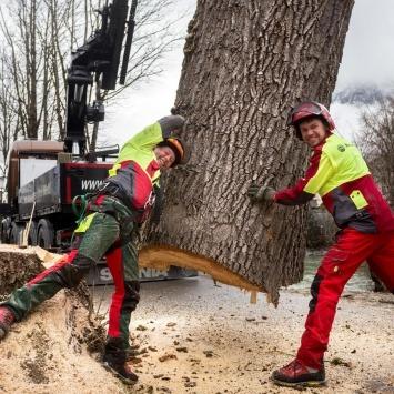 Maschinenring Mitarbeiter entfernen Baum - Bäume durch Profis sicher fällen lassen