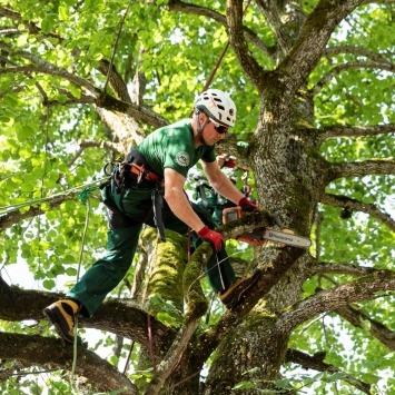 Baumpfleger des Maschinenring führt Baumschnitt durch für gesunde und sichere Bäume, die lange leben