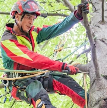 Baum schneiden, Baumschnitt, Baummanagement, gesunde Bäume - Maschinenring pflegt Ihre Bäume