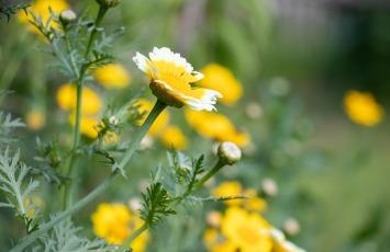 Blühwiesen für Bienen anlegen