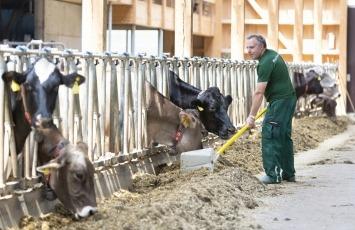 Paul Kehr im Stall bei seinen Milchviehkühen