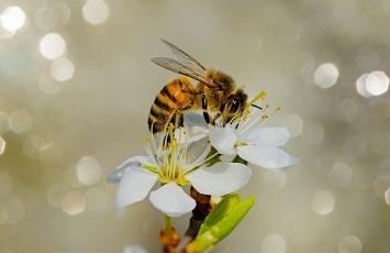 Blühinseln für Bienen