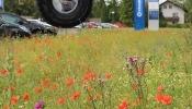 Blühstreifenaktion - mach mit - Oberösterreich