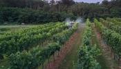 Verlustarm Sprühen im Weinbau