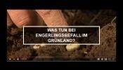 Was tun bei Engerlingsbefall im Grünland?
