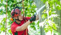 Baummanagement vom Maschinenring Niederösterreich-Wien