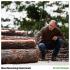Martin Winkler wirft einen Blick auf die gute Holzqualität