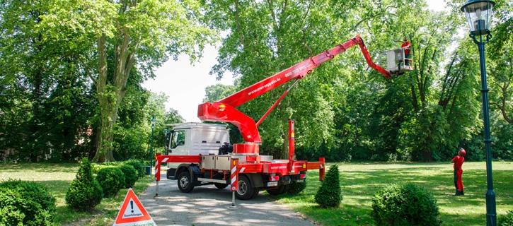 Baumsicherung vom Maschinenring