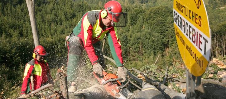 Holzschlägerungen vom Maschinenring