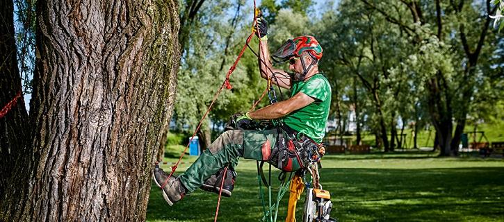 Baumpflege Vorarlberg