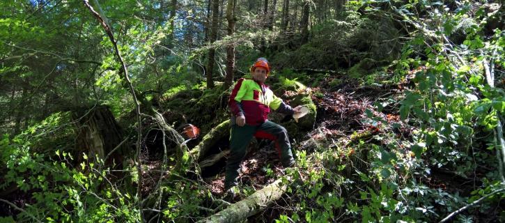 Forstservice Vorarlberg
