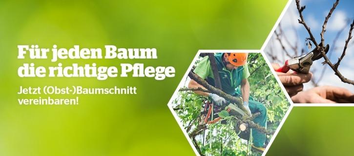 Header_Baumschnitt