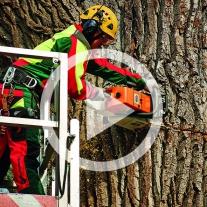 Maschinenring Baumfällung