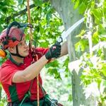 Baumpflege Maschinenring