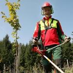 Forstarbeiten vom Maschinenring