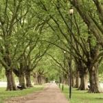Wertvoller Baumbestand