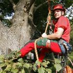 Baumkontrolle für Ihre Sicherheit