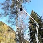 Baumpflegeauftrag in einer geschichtsträchtigen Gedenkstätte