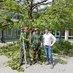 Baumpflege für Stadtgemeinden St. Johann und Bischofshofen
