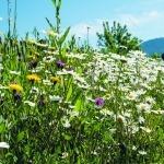 1,2 Millionen Quadratmeter Bienenweiden