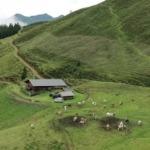 Zwischenbilanz des Projektes: Verbesserung der Weidehaltung auf Almen