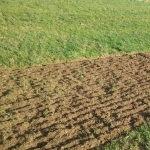 Mengen- und Qualitätsertrag im Grünland absichern