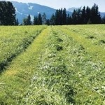 Umbruchlose Erneuerung am Dauergrünland