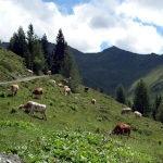 Startschuss für das Alm-/Weideprojekt von Maschinenring, Landwirtschaftskammer, Alm- und Bergbauernverein und Land Salzburg