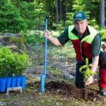 Forstpflanzensetzer