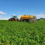 Schwieriges Frühjahr für den Maisanbau