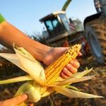Komplettangebot des Maschinenring zum Maisanbau