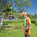 Baumpflege und Baumkontrolle für Marktgemeinde Mattsee