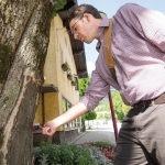 Maschinenring sorgt für fachgerechte Baumpflege