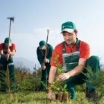 Schutz für Jungbäume