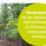 Waldfonds bietet finanzielle Unterstützung
