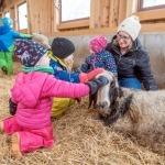 Green Care – lässt Menschen aufblühen: Soziale, pädagogische und therapeutische Angebote am Bauernhof