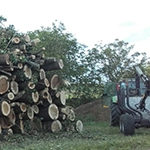 Holzrückung