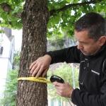 Baummanagement-Monitoring-StammMessen-Maschinenring